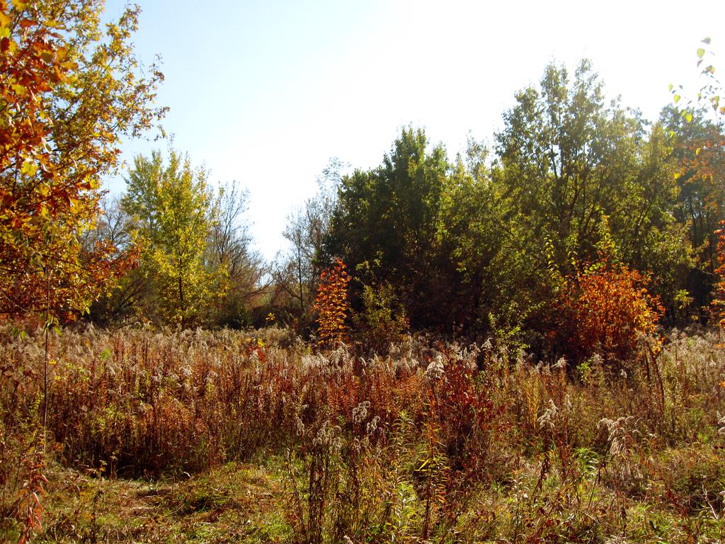 Autumn forest #1 by Warren286