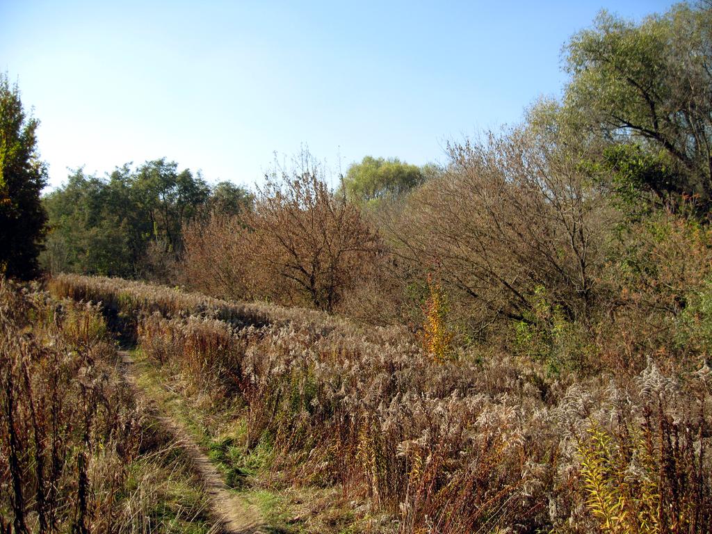 Autumn forest #2 by Warren286