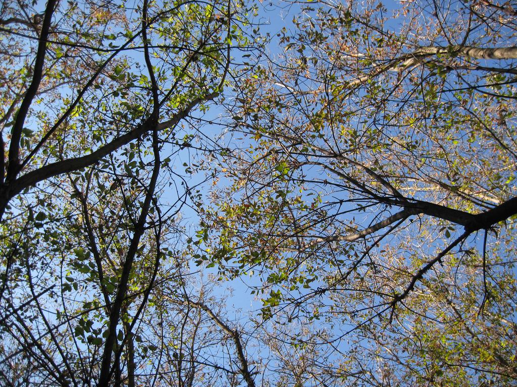 Sky between branches by Warren286