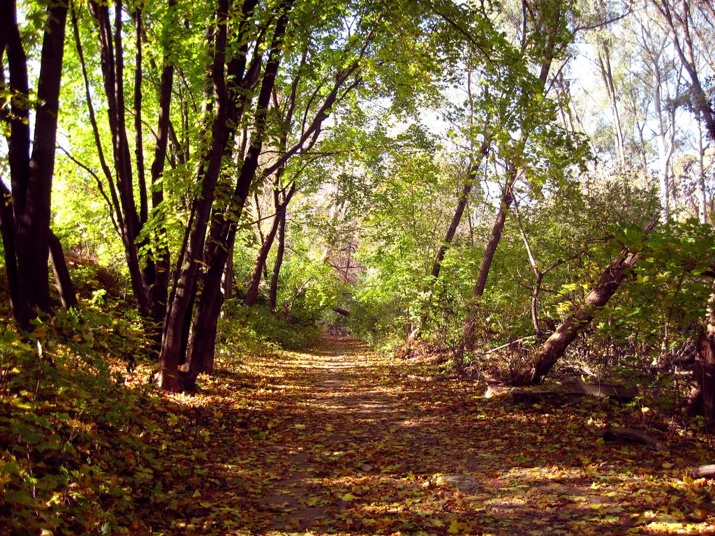 Road in the leaves #2 by Warren286