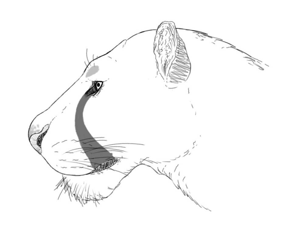 American Lion by EbonCreator
