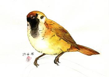 Sparrow by gibi1005