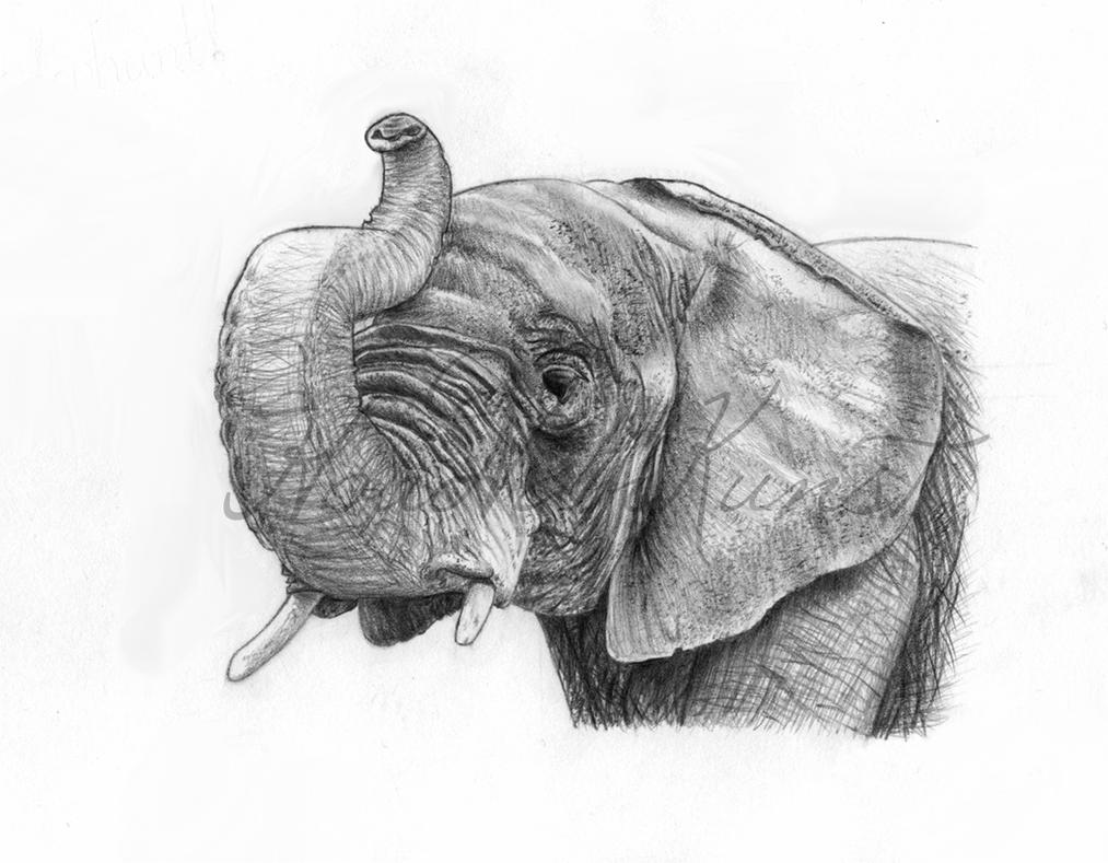 African Elephant by HoudVanKunst on DeviantArt