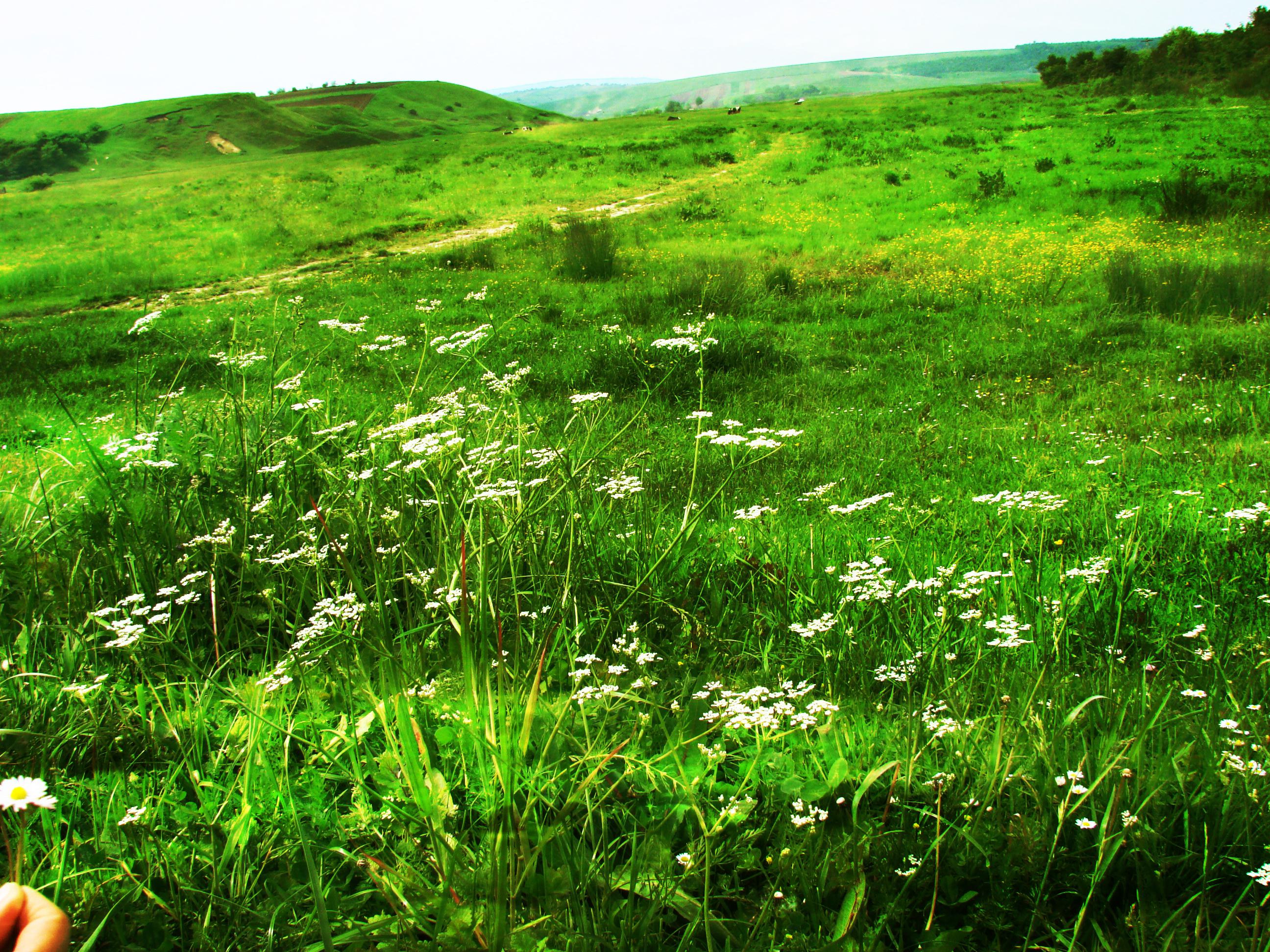 Green Field V1 By Lorylinn-stock On DeviantArt