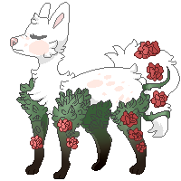 Rose bushes by Sno-berry
