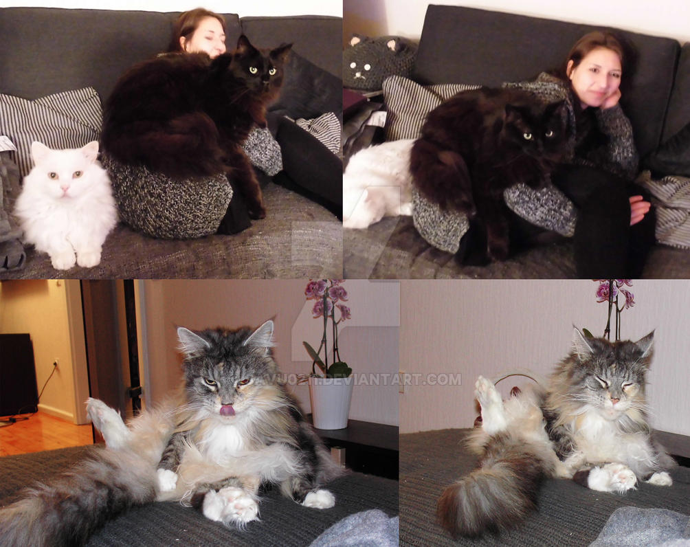 living with Cats by Savu0211