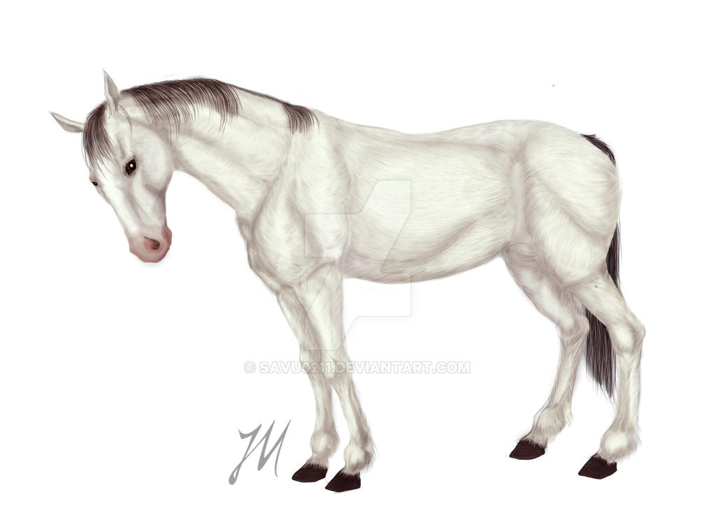 white horse by Savu0211