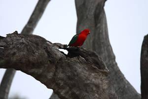 Parrot King by jbrum