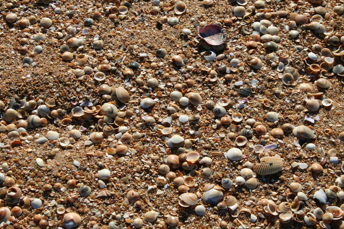Sand and Shells by zippa-dee-doo-da