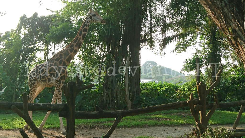 Giraffe by ladyatt