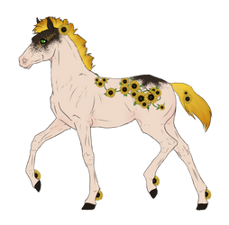N7731 Padro Foal Design For MisstMasquerade