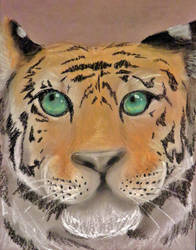 Endangered Portraits - Tiger