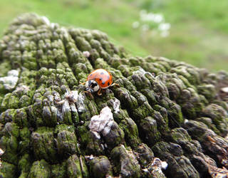 Ladybird looking for a refuge