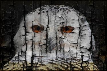 Owl on Burnt Wood by AngelEowyn