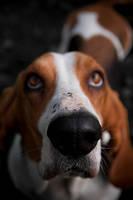 Dog 1 by GerbenT