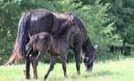 Mare and Foal 37