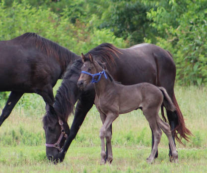 Mare and Foal 55 by MountainViewStock
