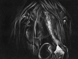 Arabian by GothicXpress