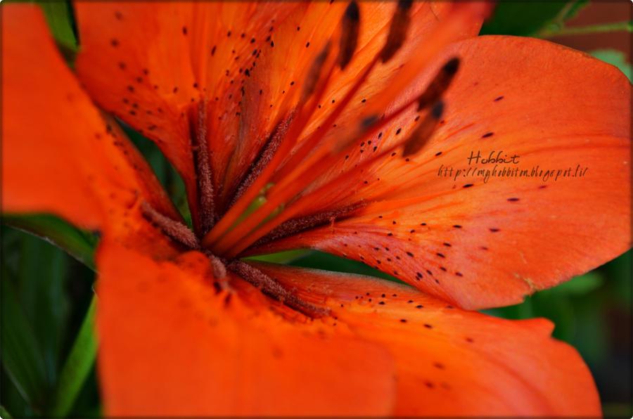 Vibrant orange. by Hanibabe
