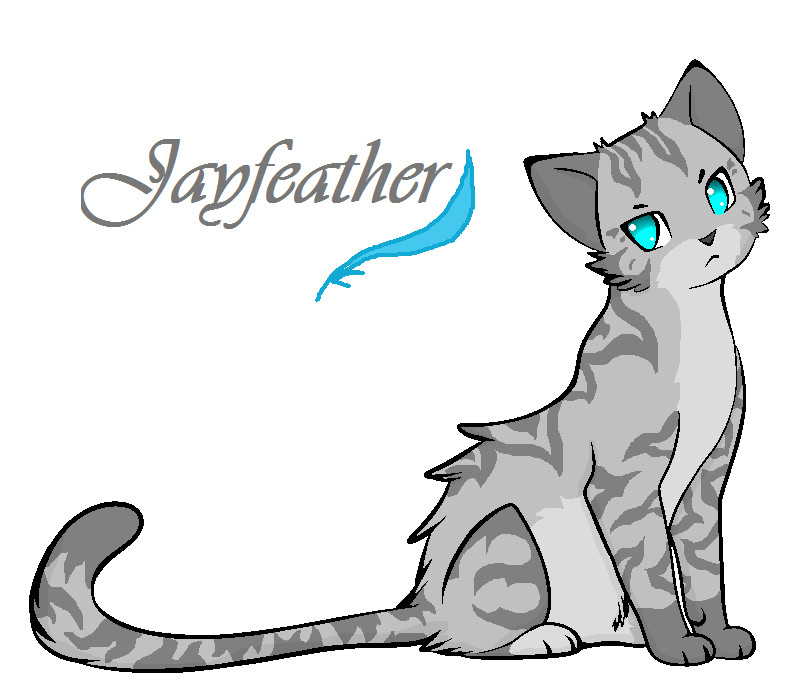 jayfeather wiki Tabby Cat Cartoon Drawing