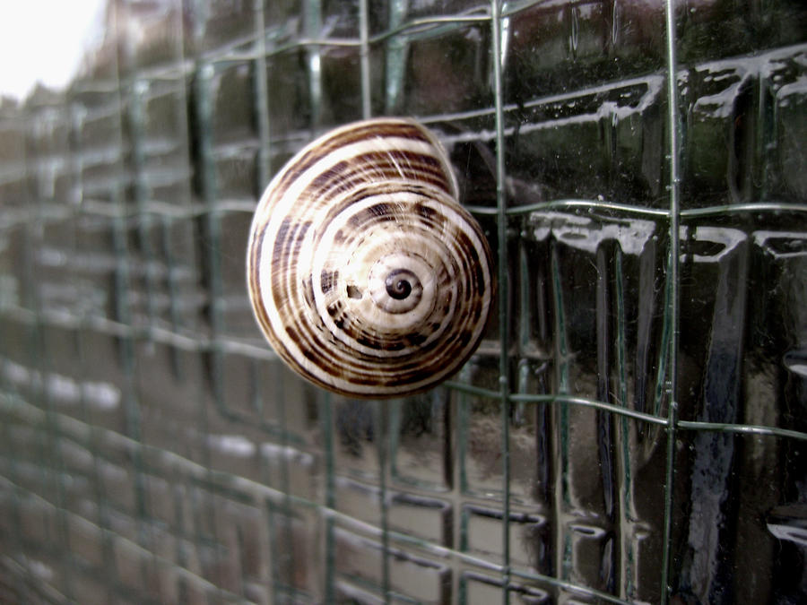 Snail Shell by mirrorsEverywhere