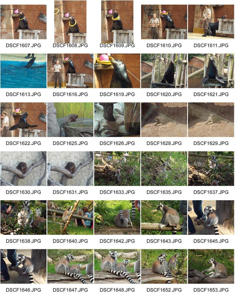 ContactSheet-005 west midlands safari park by Demon-Shadow-Wolf