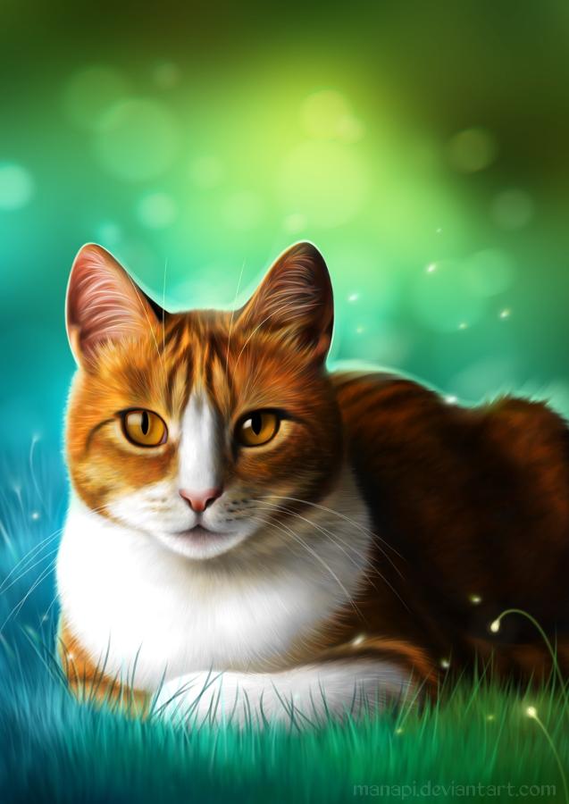Amber by manapi