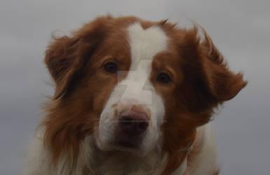 Portrait Dog 001 2016