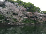 Cherry Tree Waterscape