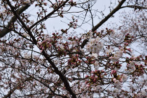 Flower Branches by Muse-4-Life