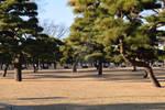 Artistic Park