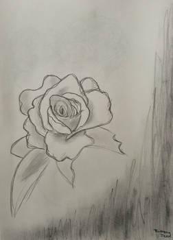 Rose Doodle