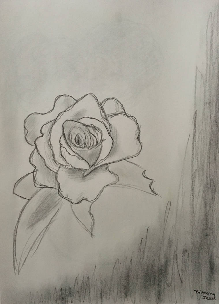 Rose Doodle by Muse-4-Life