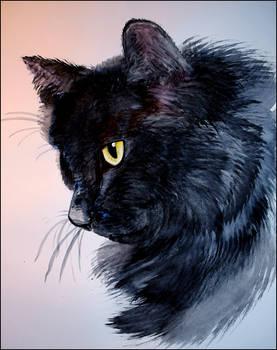 Fluffy Black Cat Watercolour