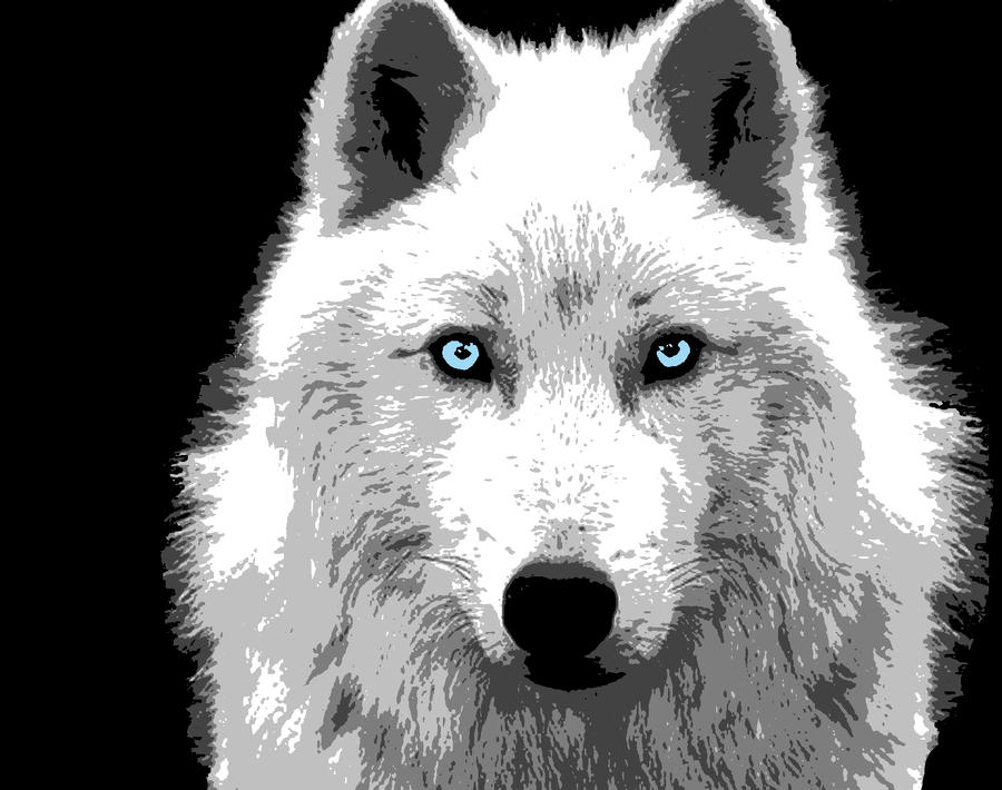 White wolf wallpaper with blue eyes - photo#16