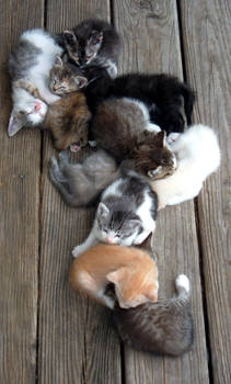 Kitty Trail of Happiness