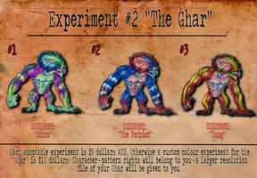 Experiment 2 The Ghar Batch 1 Adoptables