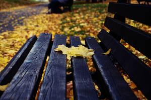 Autumn leaves by Xilomen