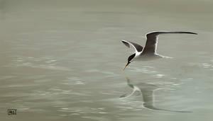 Terns are awsome! by fablau