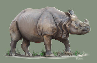 Indian Rhino (Rhinoceros Unicornis) by RobbieMcSweeney