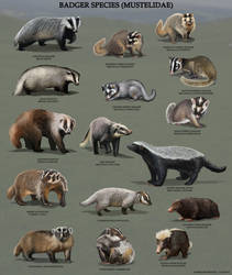 All Badger Species by RobbieMcSweeney