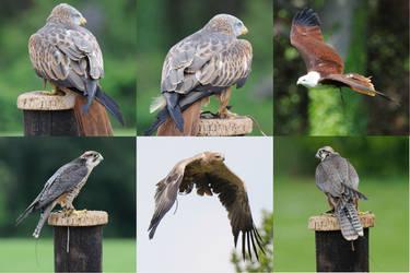 Birds of prey Stock