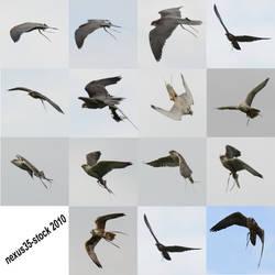 Birds of Prey - Flight 2 STOCK