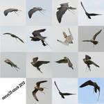 Birds of Prey - Flight 2 STOCK by nexus35-Stock