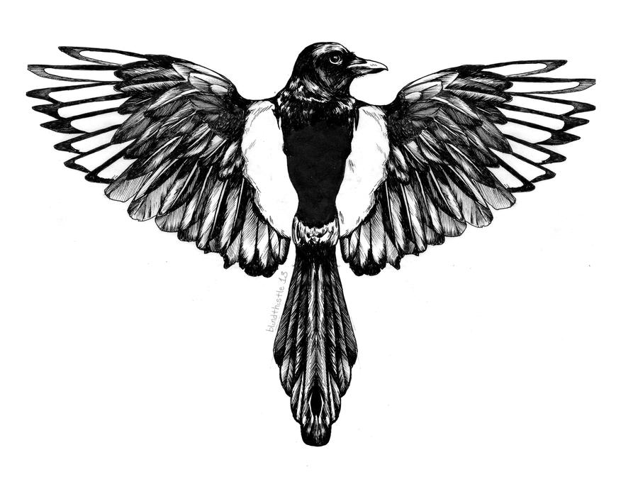 Magpie By Blindthistle On Deviantart