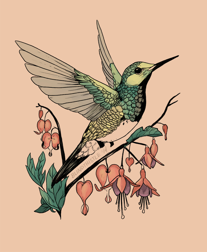 Humming Bird Flash By Blindthistle On DeviantArt