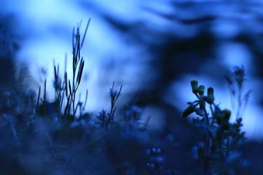 Nightbird's Song by renaxx