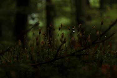 Quiet World by renaxx