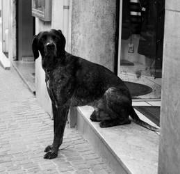 dog, Viterbo, Italy by audiozona