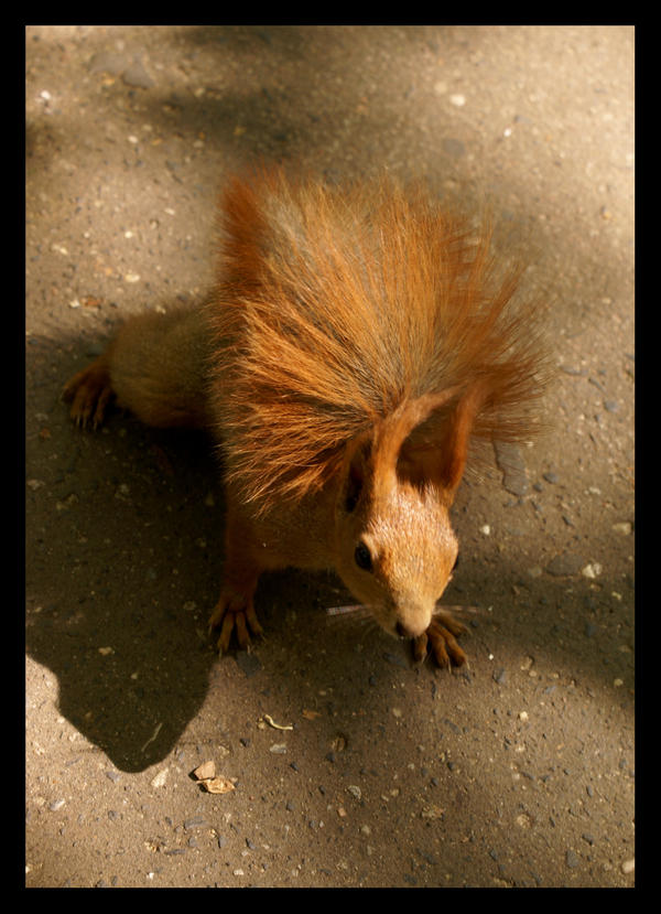 Squirrel by LadybirdM
